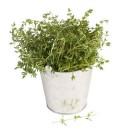 Melhores ervas para emagrecer
