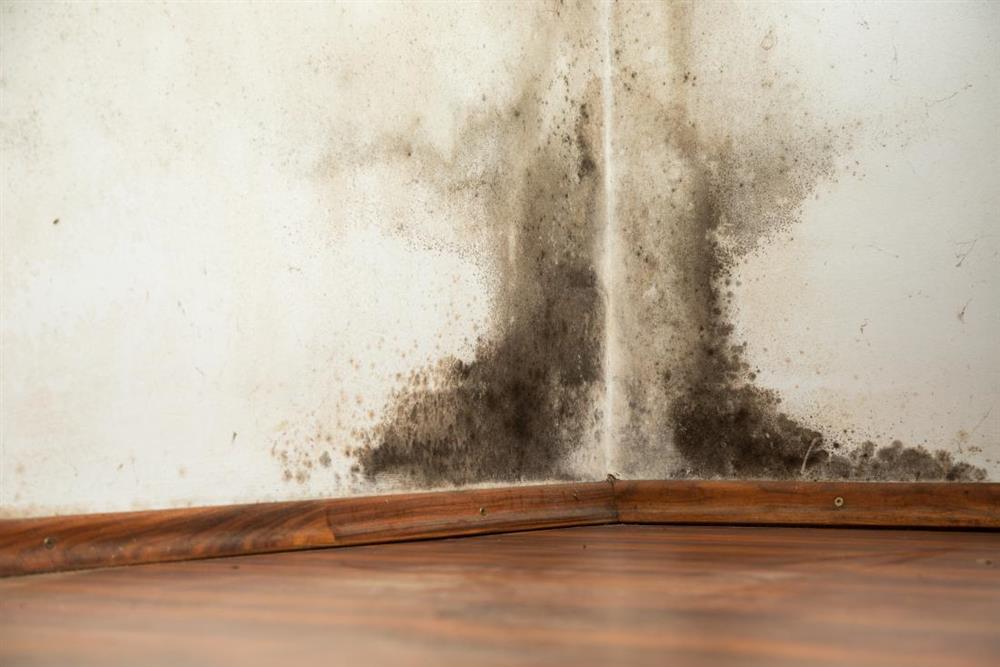Como tirar mofo da parede com água sanitária