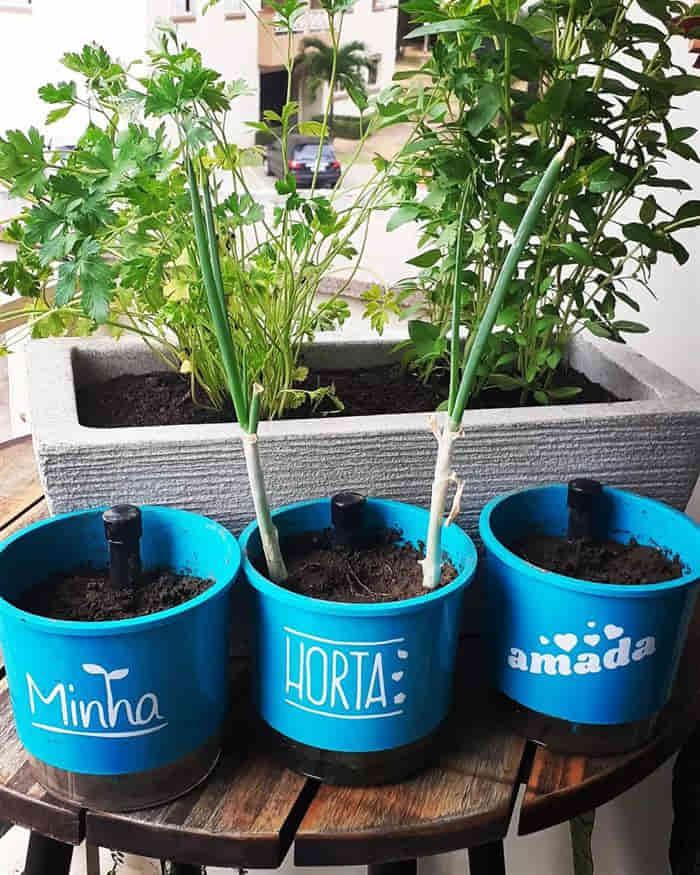 horta em vasos para apartamento